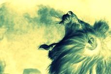 lions-breath-001.jpg